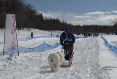 2014年きぬがわ高原犬橇大会3