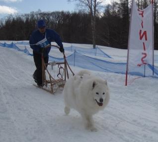 2014年きぬがわ高原犬橇大会4