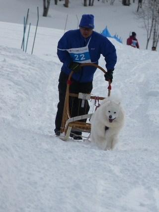 2014きぬがわ高原橇大会5