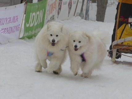 ミナカミ橇大会3