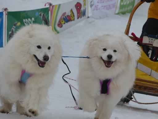 ミナカミ橇大会5