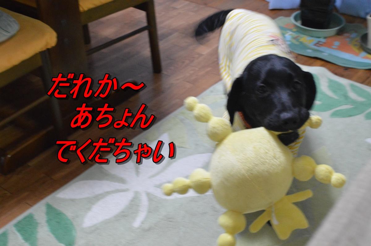 DSC_2221.jpg