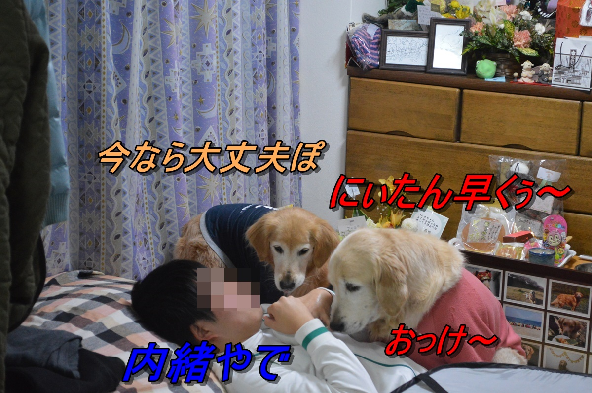 DSC_2294.jpg