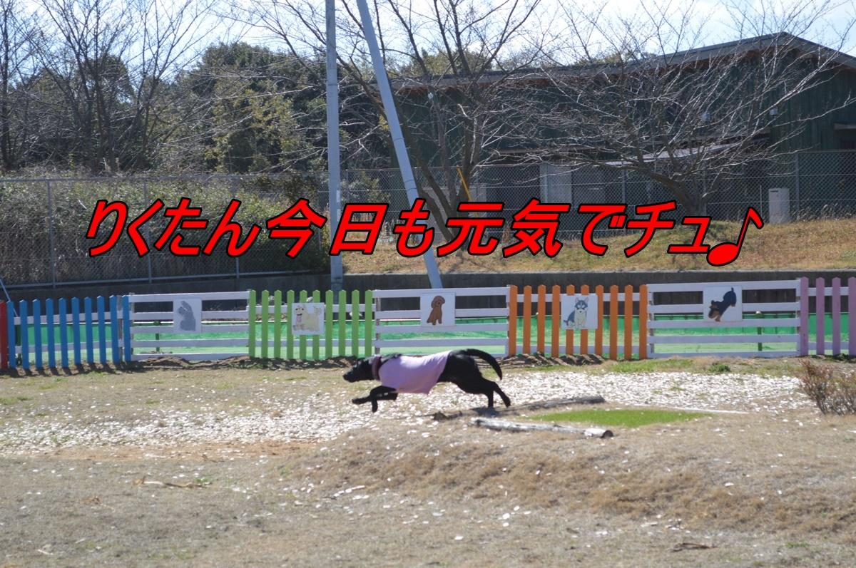 DSC_2778.jpg