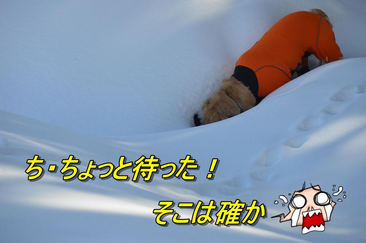 DSC_2783_20140302214619d8f.jpg