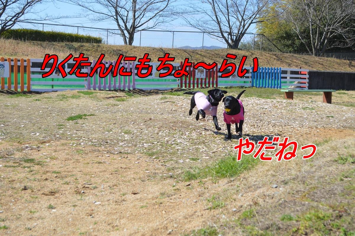 DSC_2804.jpg