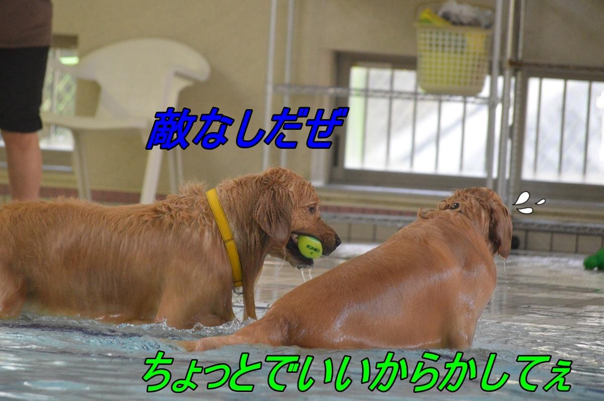 DSC_2808.jpg