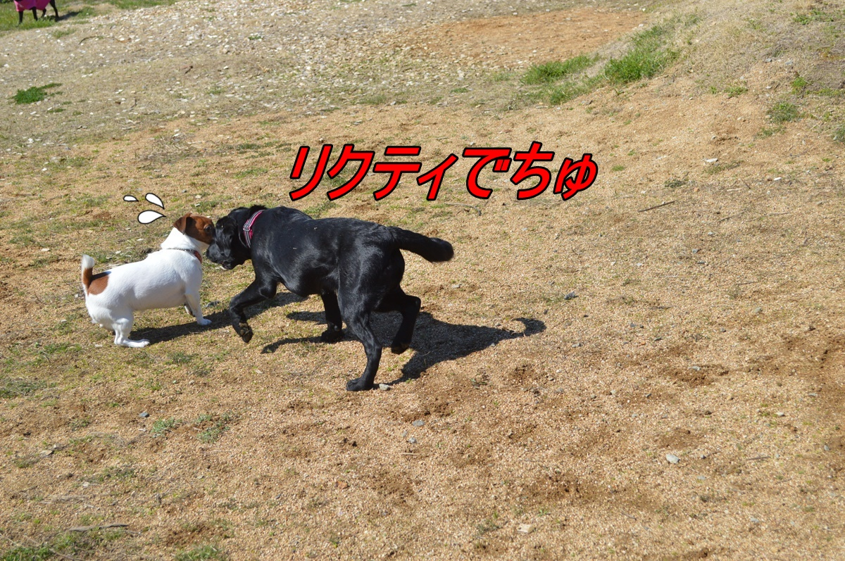DSC_2834_20140329220154058.jpg
