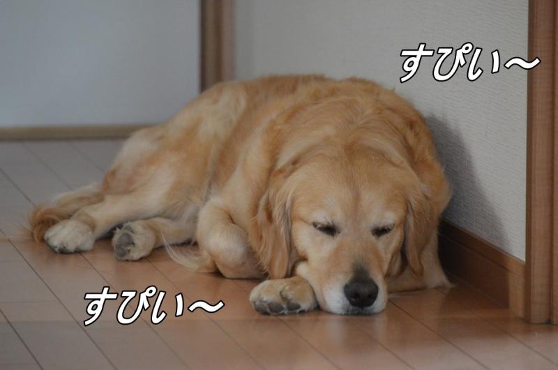 DSC_3079.jpg