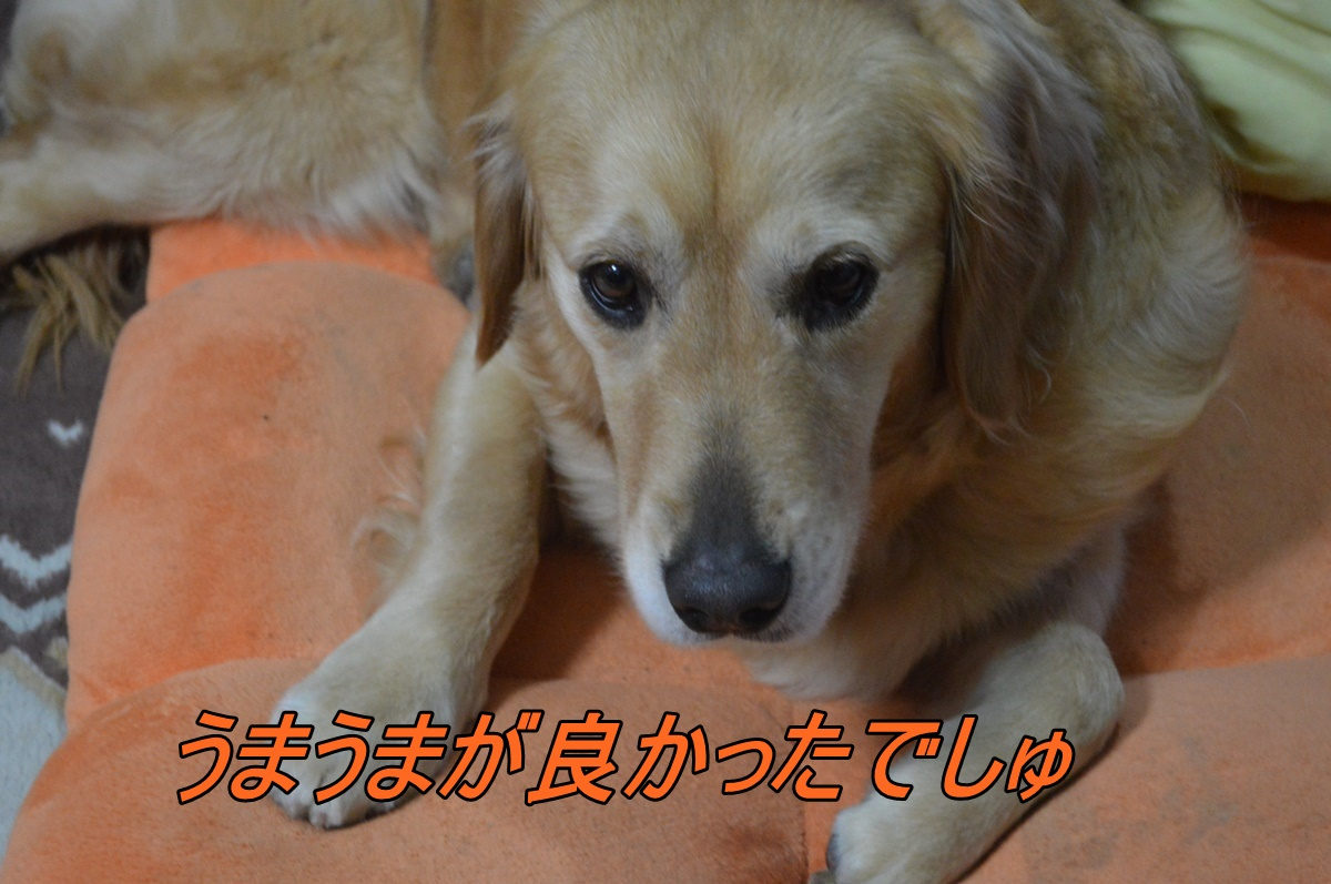 DSC_3309.jpg