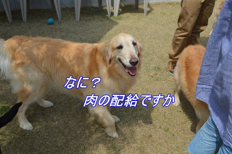 DSC_3361_2014042321532322c.jpg