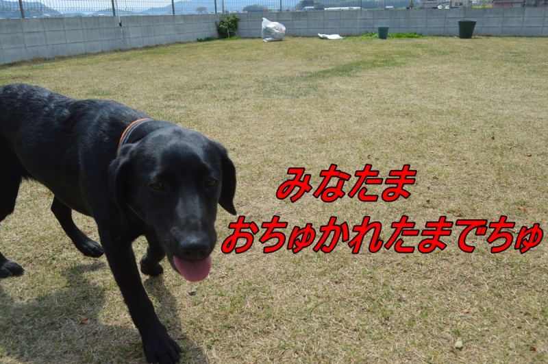 DSC_3363_20140422225958ed8.jpg