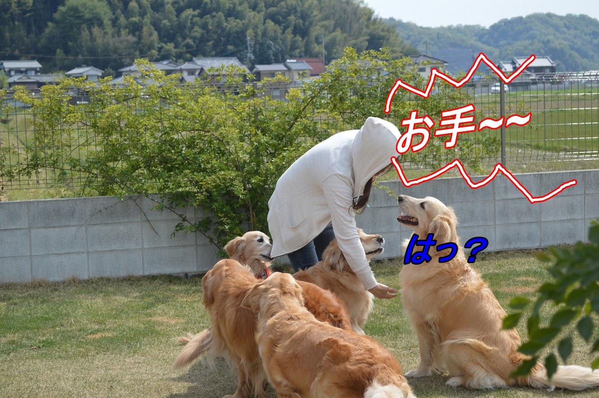 DSC_3366_201404242011194ed.jpg