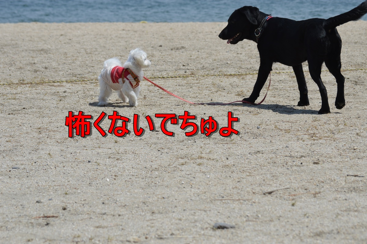 DSC_4279.jpg