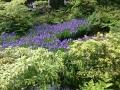 根津美術館。たくさんの燕子花を愛でる。