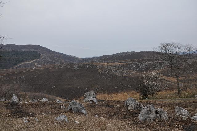 1403yamaguchi (10)