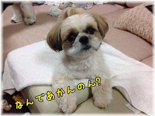 kosurono4.jpg