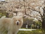 桜をバックに…2014