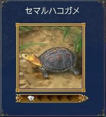安平書庫地図~セマルハコガメ