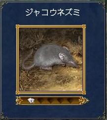 安平書庫地図~ジャコウネズミ