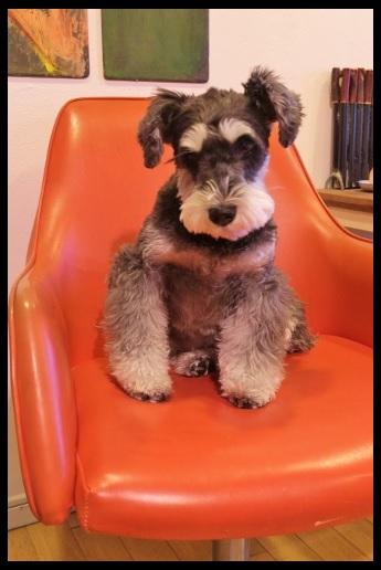 ジギーと赤い椅子。