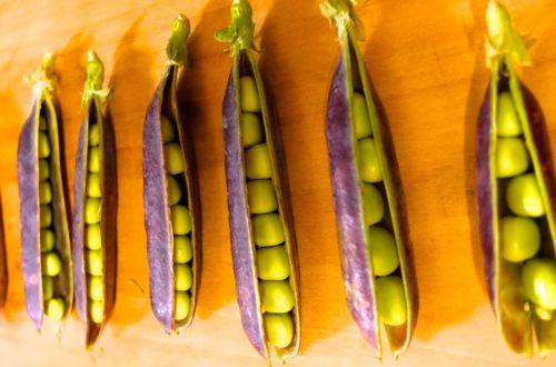 才色兼備の豆。