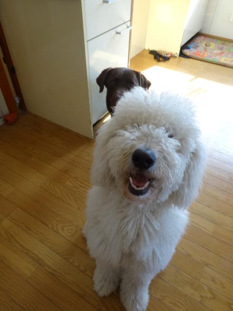 笑う犬 025