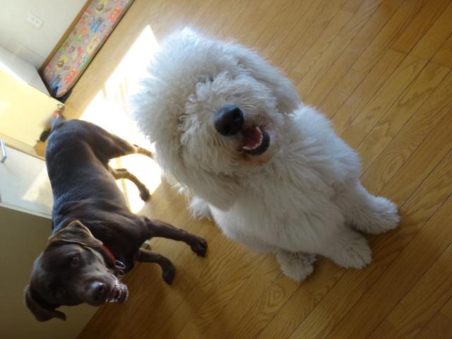 笑う犬 023