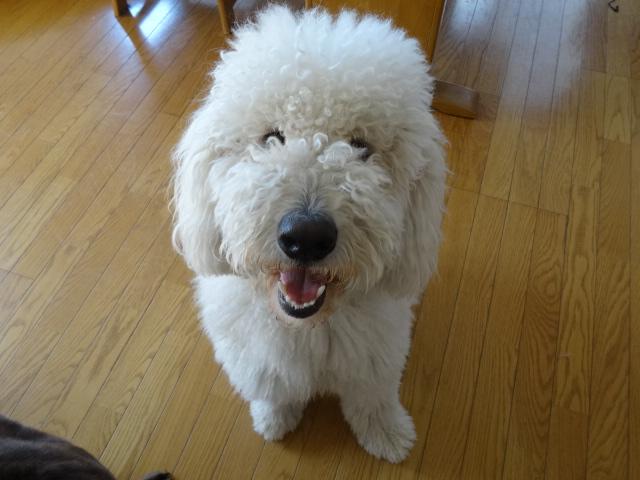 笑う犬 017