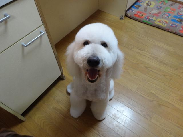 笑う犬 044