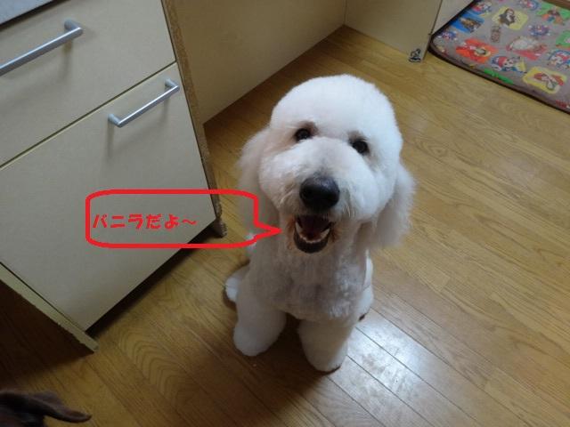 笑う犬 043