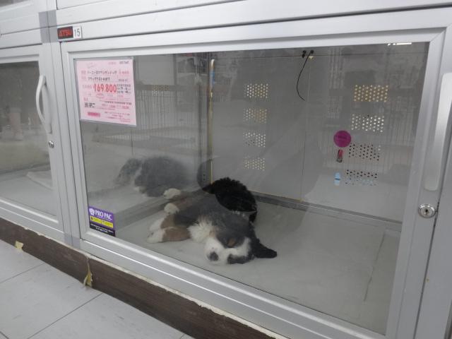 神社閉店 009