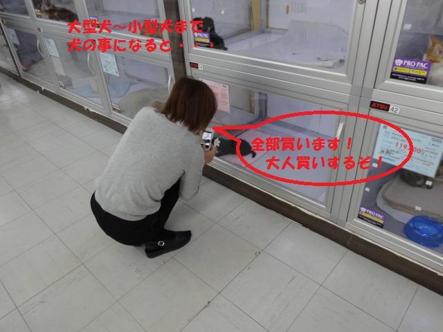 神社閉店 014