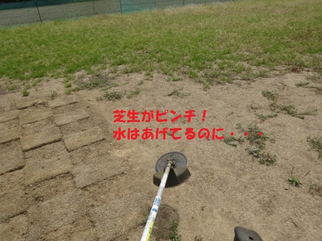 草刈り 003