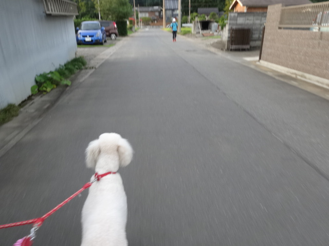 お散歩 039