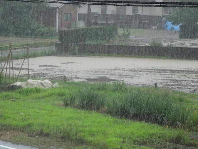雨 005