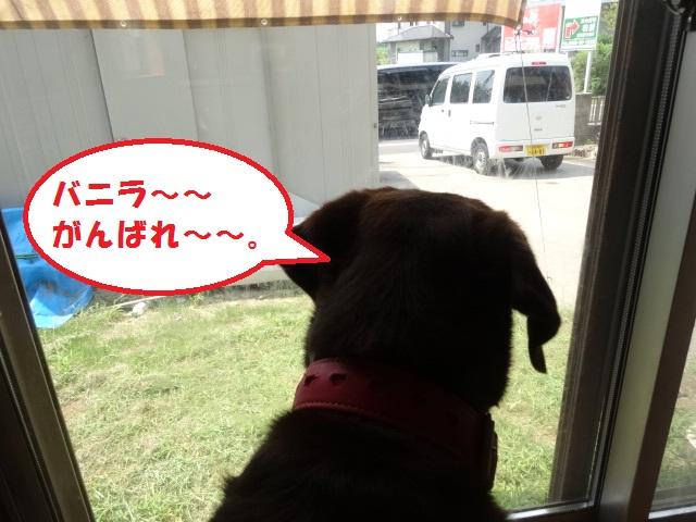 片足ミステリーサークル 030