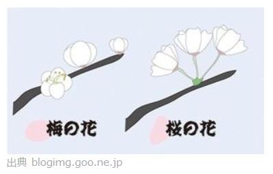 桜 違い 梅 梅と桜と桃の違い すぐわかる花の見分け方