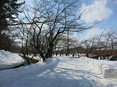 IMG_7952-hirosaki.jpg