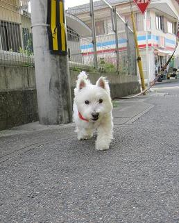 けむしとお散歩 003