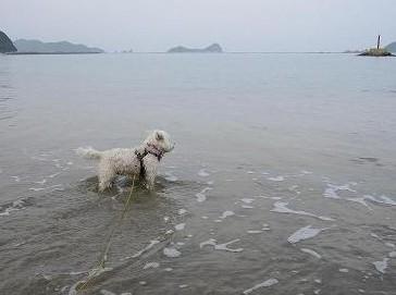 2014初の海遊び 008