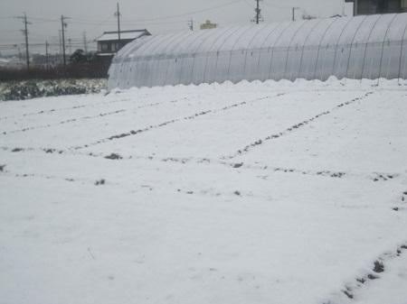 2014/2/8初積雪