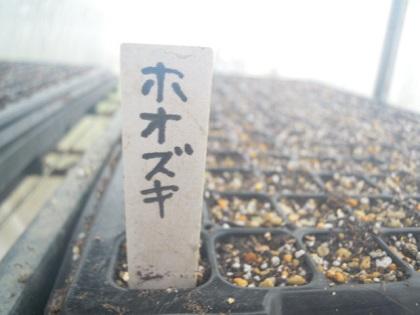 ほおずき14/3/1(播種)