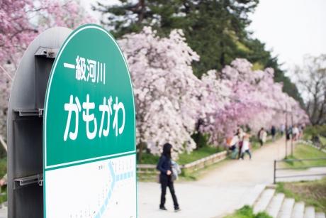 2014kamogawa.jpg