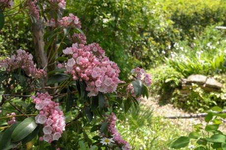 tasha_tudor_garden_4.jpg
