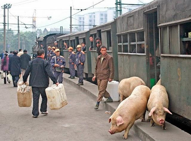 131209_2552_73_Pig-Train-055.jpg