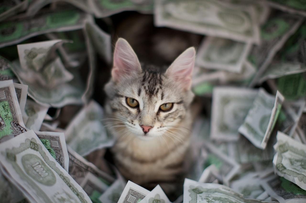 Money-Cat.jpg