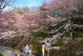 大井弁天の森