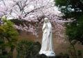 マリア像と桜