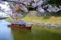 屋形船での花見